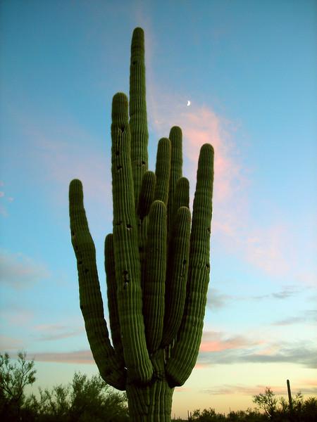 0139 Cactus