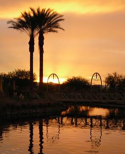 0188 Palms at Sunrise crop