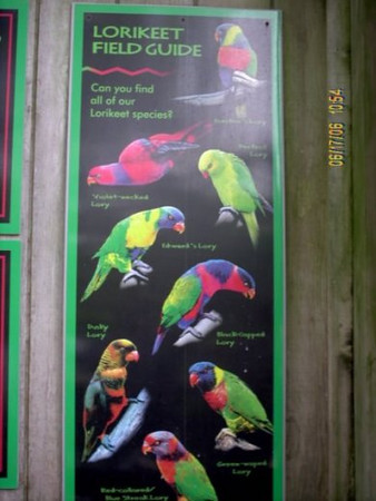 Information Board<br />  Sign describes the different types of Lorikeets.