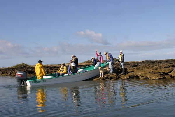 2006 The Gray Whales in San Ignacio Lagoon (MX)