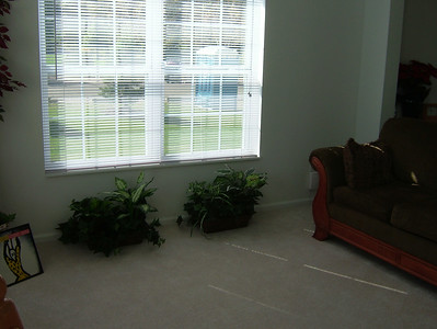 Side Windows in Living Room--faces park area