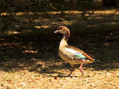 August 31st - Johannesburg Botanical Gardens
