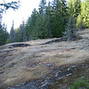 Relatively recent glacial activity in Box Canyon (Mt. Rainier)