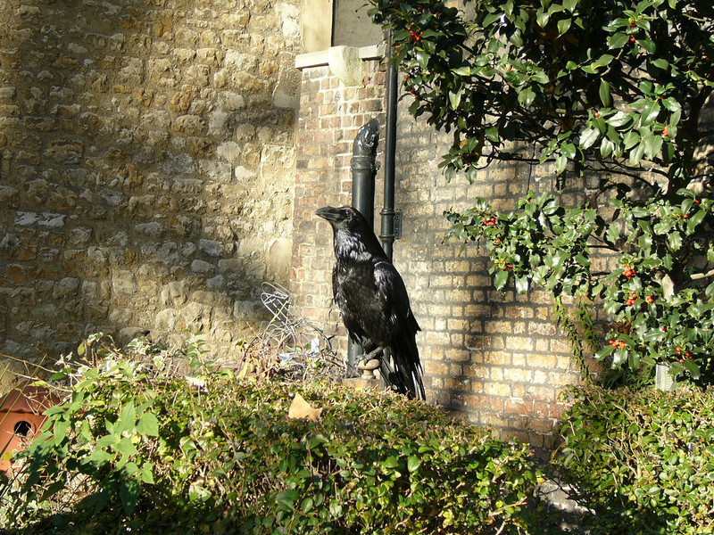 034 - legend has if ravens leave