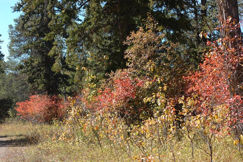 Along the Moose-Wilson RdGrand Teton National Park