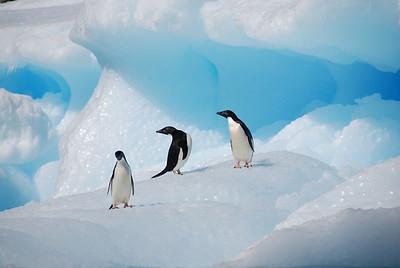 Local residents of Antarctica