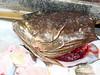 Fish head anyone?