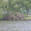 Foliage along West Lake