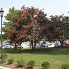 Trees at Jamestown Settlement visitor center