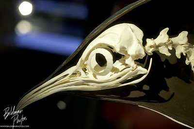 Penguin  The side we never see on National Geographic