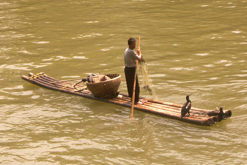Here's a closer view of the fisherman in the previous photo. They ride on bamboo rafts and have trained comorants to catch the fish for them The bird's necks are tied so that they cannot swallow the fish they catch.