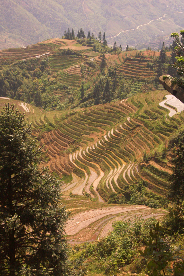 Here are those rice paddies on mountain ridges near Guilin. The area is called Long Sheng (dragon spine).
