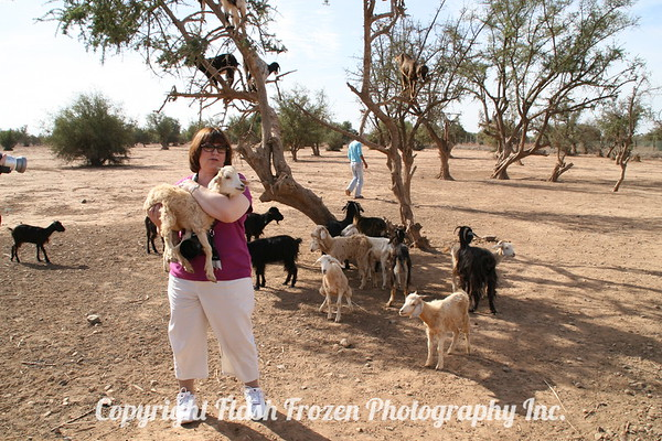 Travel Snapshot by my friend, Fred, with me and the Famous Tree Goats of Taroudant in Morocco