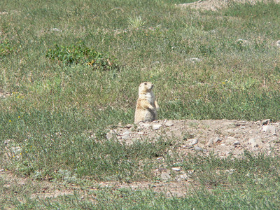 Natania called the prairie dogs beavers.