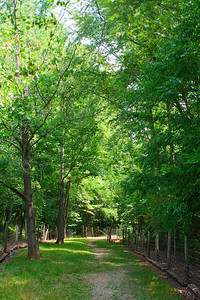 6552 Path Thru Trees