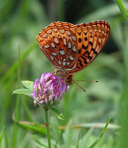 6746 Butterfly