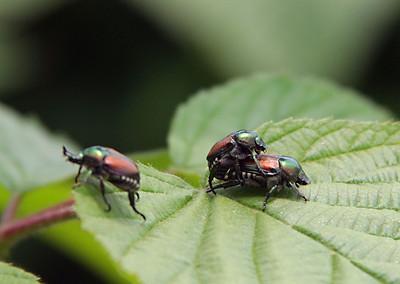 6770 Bugs in Love