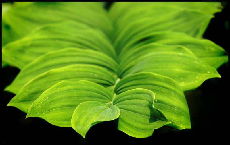 6723 Green Plant