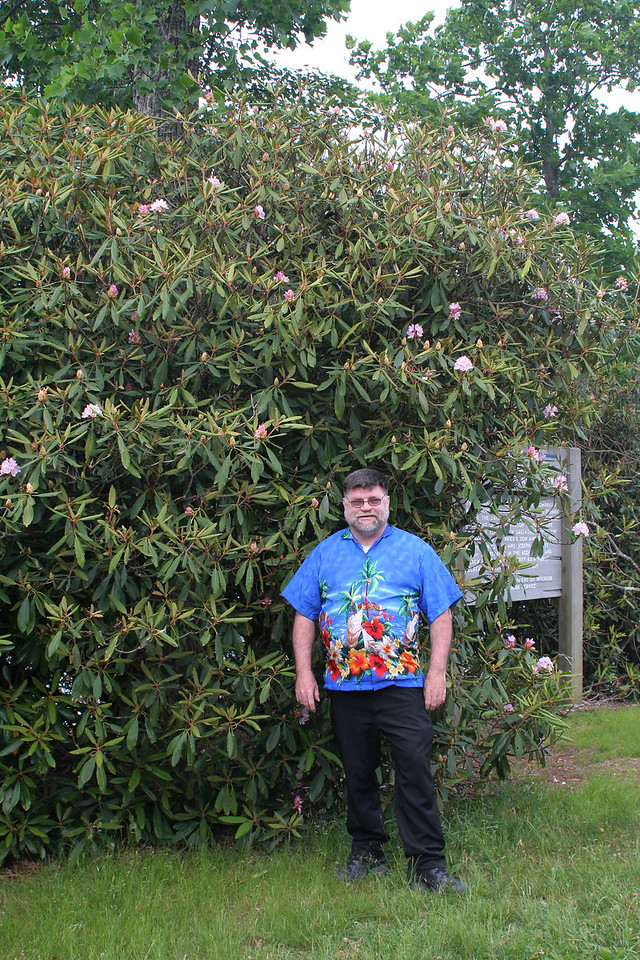 6800 Bob Rhododendrons