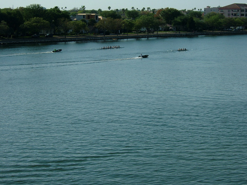 Scull racers on Tampa Bay
