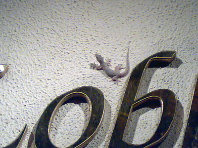 Gekko on the wall at night at our hotel in Kota Kinabalu
