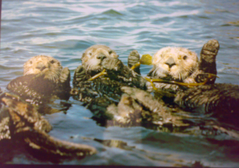 Photo of a suitable greetings card we acquired at Heathrow Airport on our way out - we hoped we were headed for rather warmer waters than these!
