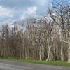 Not a very interesting photo but it shows how all the trees in the mid and southern parts of Shenandoah NP were recently affected by a severe ice storm. Almost all trees (mostly hardwoods in this area) show severe limb damage.