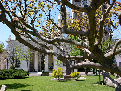 Argentina, San Nicolás. Modern square, interesting tree (cotton-like).