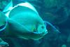 2008-03-21 Boston Aquarium 021