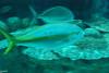 2008-03-21 Boston Aquarium 018