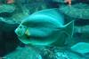 2008-03-21 Boston Aquarium 001
