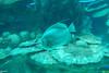 2008-03-21 Boston Aquarium 016