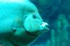 2008-03-21 Boston Aquarium 023