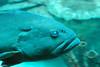 2008-03-21 Boston Aquarium 013