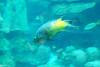 2008-03-21 Boston Aquarium 019