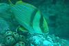 2008-03-21 Boston Aquarium 004