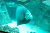 2008-03-21 Boston Aquarium 015