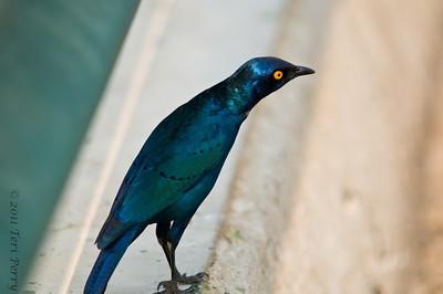 bird (9)
