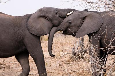 elephants (7)