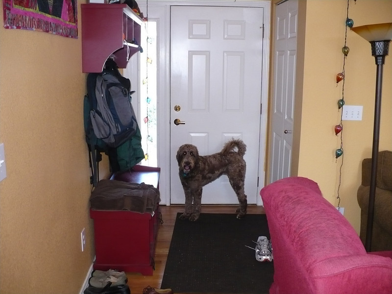 Mazie, the best dog in the world (BDITW), signaling at the front door that it is time to play.