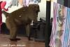 Baboon raiding the trash