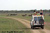 Watching the wildebeest migration