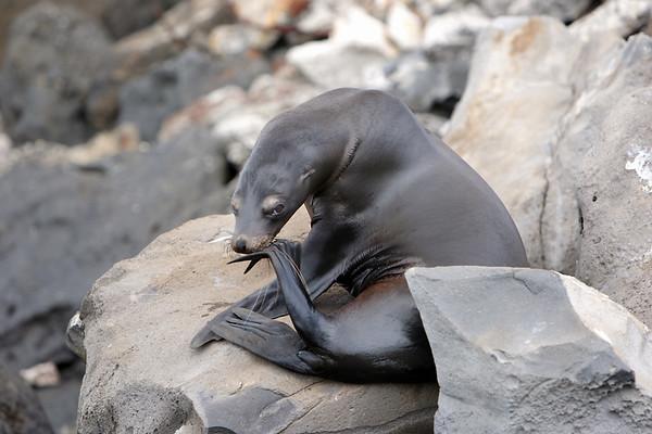 2008 Galapagos Islands