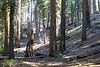 2008-1006-SierraBackpacking
