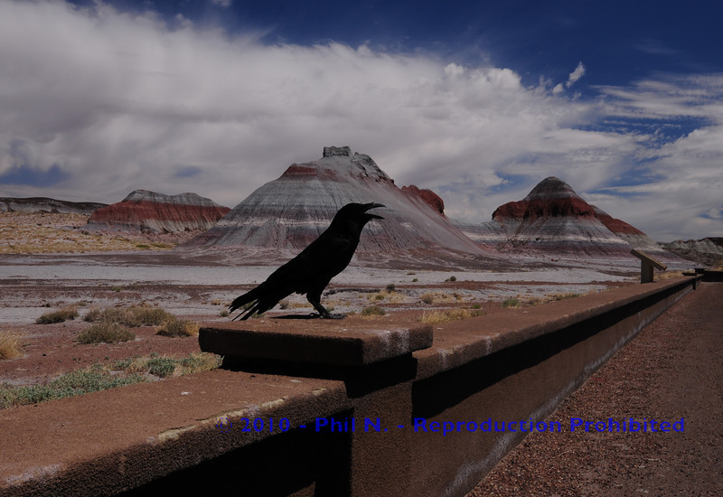 "This is real - no photoshoppin' - just the right, lucky moment....This is right at the end of ""Petrified Forest"" driving towards ""The Painted Desert"""