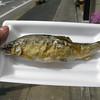 015 - fish on a stick