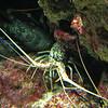 015 - lobster