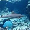 009 - shark