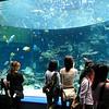 013 - aquarium