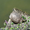 008 - turtle
